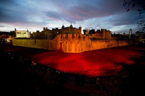 The nearly completed ceramic poppy art installation at the Tower of London at sunrise on November 11th. NPR